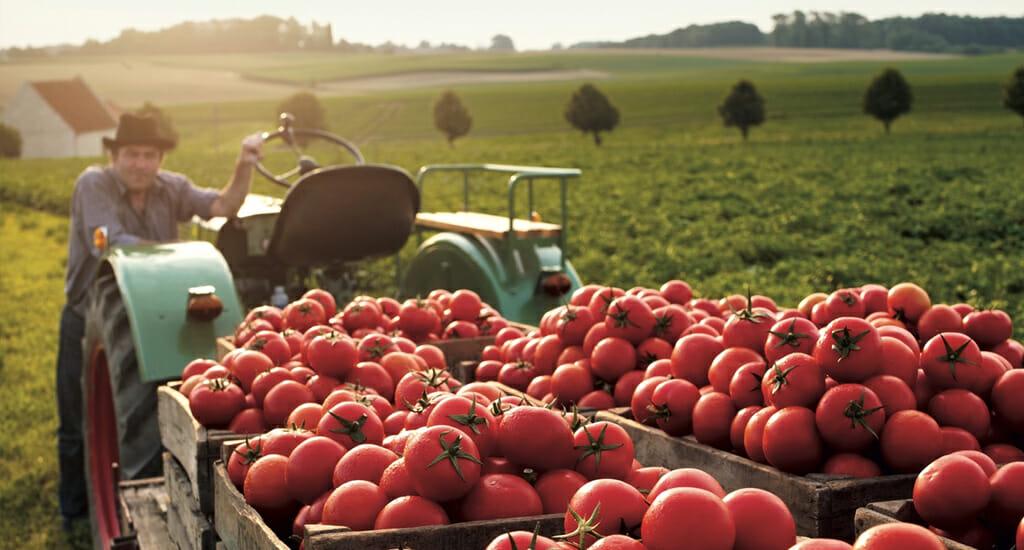 Italian Tomato Variations